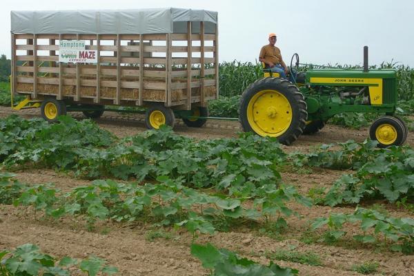 Hamptons Greenhouse and Corn Maze